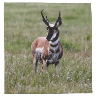 Nice Pronghorn in a green field. Napkin