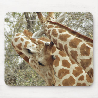 Niger, Koure, two Giraffes in bushes in the west Mousepad