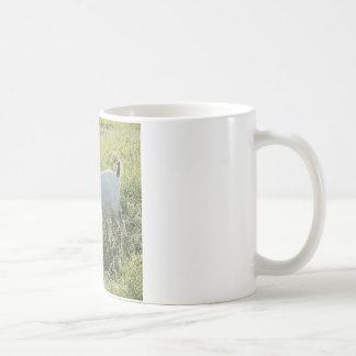 Nigerian Dwarf Goat Coffee Mug