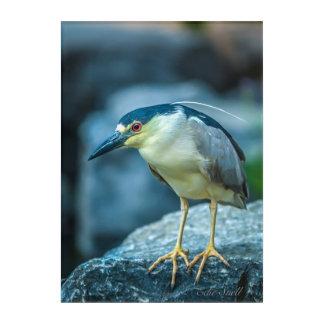 Night Heron Acrylic Print