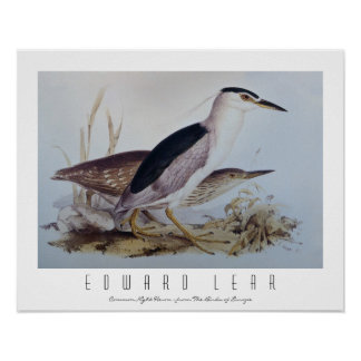 Night Herons Poster