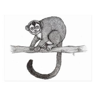 Night monkey (Aotus spec.) sketch by Nicole Janes Postcard