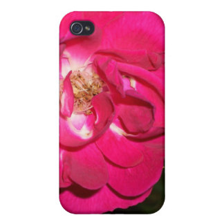 Night Rose CricketDiane Art & Photography iPhone 4/4S Case