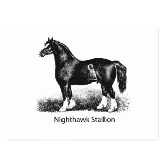 Nighthawk StallionProduct Selected Multiple Postcard