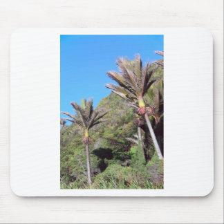 Nikau palms iconic New Zealand trees Mousepad