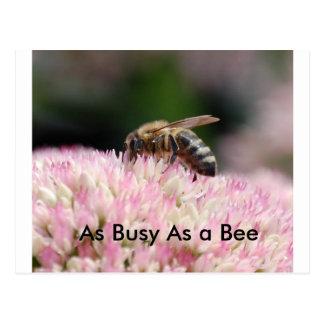 Nikon11 009, As Busy As a Bee Postcard