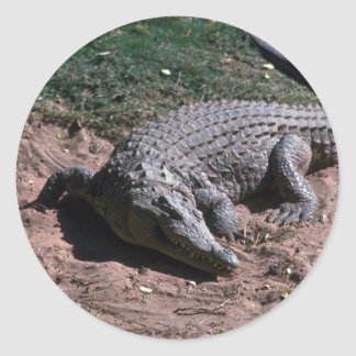 Nile Crocodile Classic Round Sticker