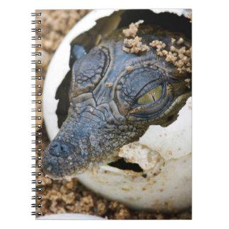 Nile Crocodile Hatchling Emerging From Egg Spiral Notebook
