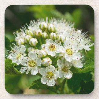 Ninebark Virginia Wildflower White Floral Coasters