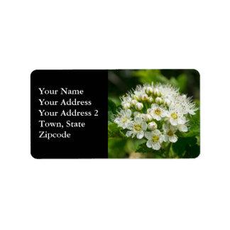 Ninebark Virginia Wildflower White Floral Labels