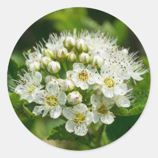 Ninebark White Wildflower Floral Round Stickers