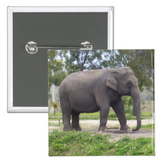 No Tusk Elephant 15 Cm Square Badge