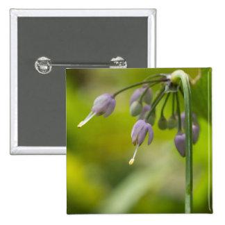 Nodding Wild Onion Lilac Purple Wildflower Button