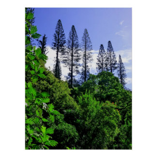 Norfolk Island Pine Trees Poster