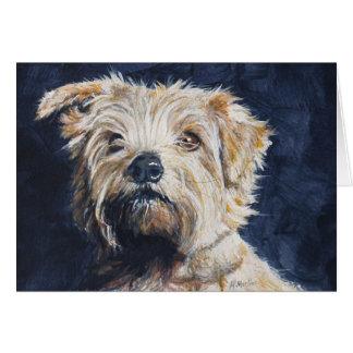 Norfolk Terrier head study Card