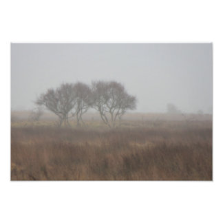 Norsey in the mist art photo