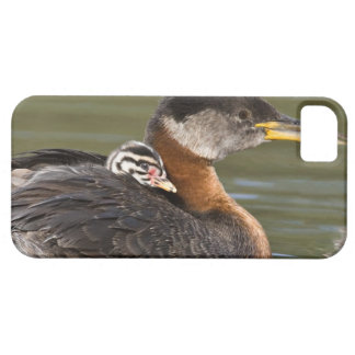 North America, Canada, British Columbia, Logan 2 Barely There iPhone 5 Case
