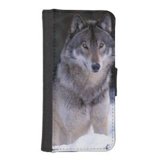 North America, Canada, Eastern Canada, Grey wolf