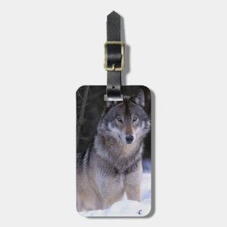 North America, Canada, Eastern Canada, Grey wolf Luggage Tag