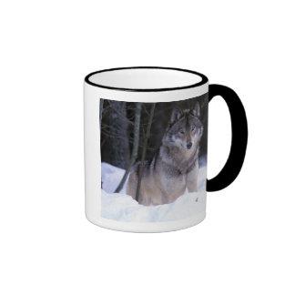 North America, Canada, Eastern Canada, Grey wolf Ringer Mug
