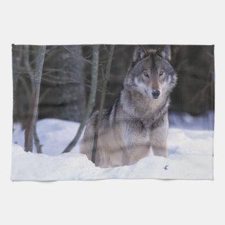 North America, Canada, Eastern Canada, Grey wolf Tea Towel