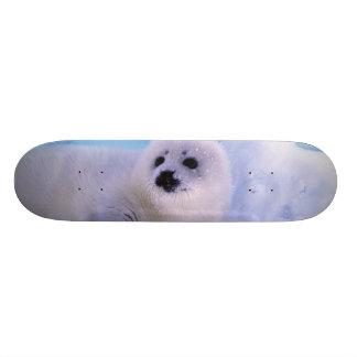 North America, Canada, Gulf of St. Lawrence. 2 21.3 Cm Mini Skateboard Deck