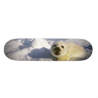 North America, Canada, Gulf of St. Lawrence. 5 Skate Board Decks