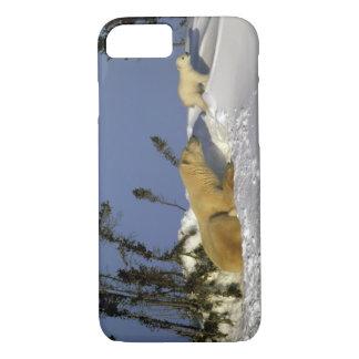 North America, Canada, Manitoba, Churchill. 5 iPhone 7 Case