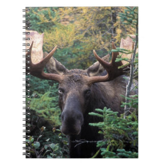 North America, Canada, Nova Scotia, Cape Breton Notebooks