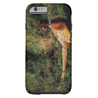 North America, Canada, Nova Scotia, Eastern 2 Tough iPhone 6 Case