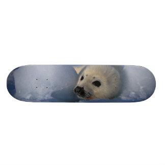 North America, Canada, Quebec, Iles de la 2 Skateboard Deck