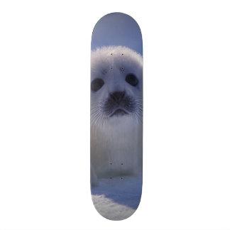 North America, Canada, Quebec, Iles de la Skate Board
