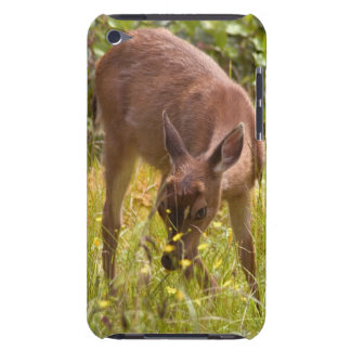 North America, Canada, Queen Charlotte iPod Touch Covers