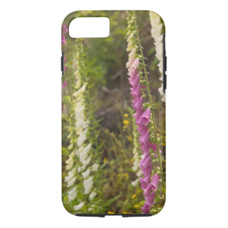 North America, Canada, Queen Charlotte Islands, 2 iPhone 7 Case