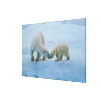 North America, Canadian Arctic. Polar bear and Canvas Prints