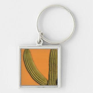 North America, Mexico, Baja California, Cabo Silver-Colored Square Key Ring