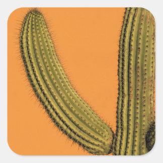 North America, Mexico, Baja California, Cabo Square Sticker