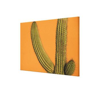 North America, Mexico, Baja California, Cabo Stretched Canvas Prints