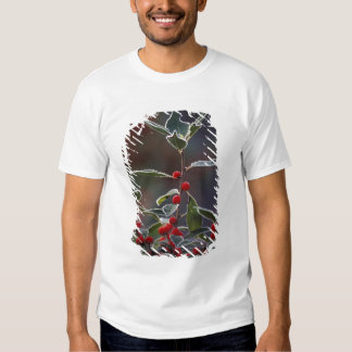 North America, United States, New England. Holly 2 Shirts