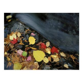 North America, US, ME, A stream in fall. Postcard