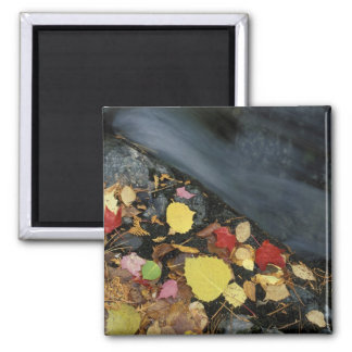 North America, US, ME, A stream in fall. Square Magnet