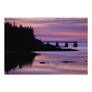 North America, US, ME, Isle Au Haut. Duck Photo