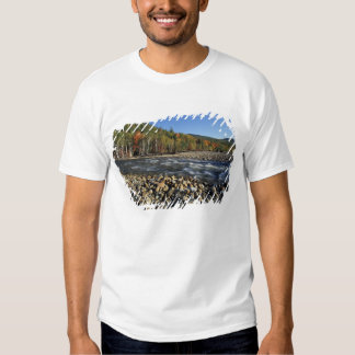 North America, US, NH, A cobble beach on the Tshirts