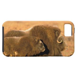 North America, USA, Alaska, Arctic National iPhone 5 Cover