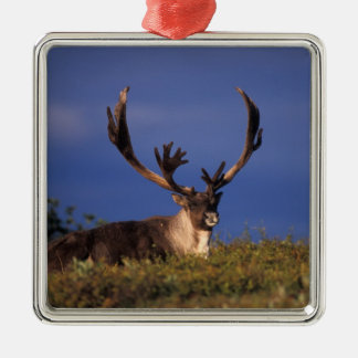 North America, USA, Alaska, Denali National Silver-Colored Square Decoration