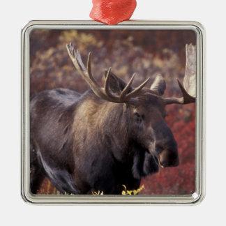 North America, USA, Alaska, Denali NP. Alces Silver-Colored Square Decoration