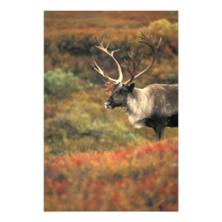North America, USA, Alaska, Denali NP, Tundra. Photo