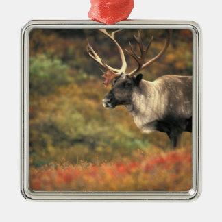 North America, USA, Alaska, Denali NP, Tundra. Silver-Colored Square Decoration