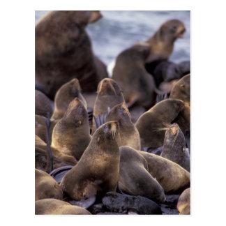 North America, USA, Alaska. Endangered Postcard