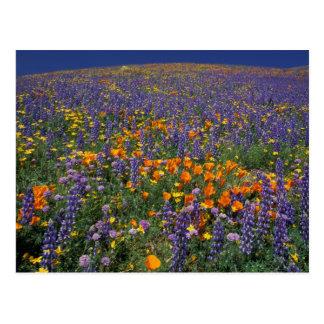 North America, USA, California, Los Angeles 2 Postcard